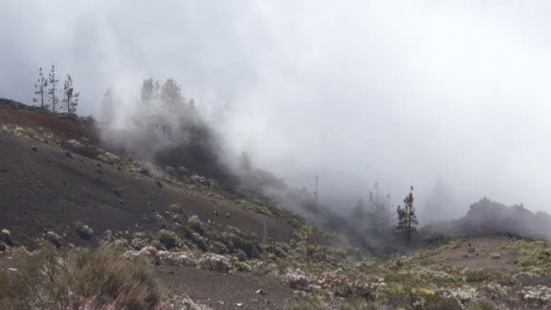 Brouillard dans les montagnes de tenerife — Vidéo