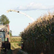 Corn harvesting — Stock Video