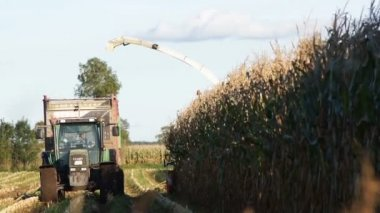 Corn harvesting — Vídeo Stock
