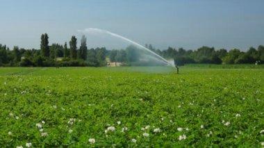 Irrigatore al lavoro — Video Stock