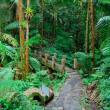 Tropical rain forest in San Juan - Stock Photo