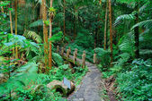 Tropical rain forest in San Juan — Stock Photo