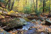 Yellow Autumn creek — Stock Photo