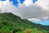 Tropical rain forest in San Juan — Foto Stock