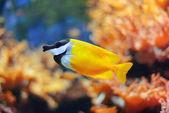 Acquario di londra — Foto Stock