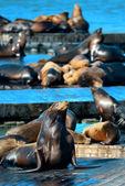Seals — Stock Photo