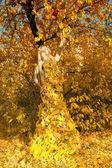 It is dressed at autumn — Stockfoto