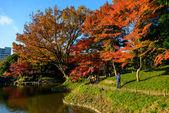 Koishikawa Korakuen Garden in Autumn in Tokyo — Stock Photo