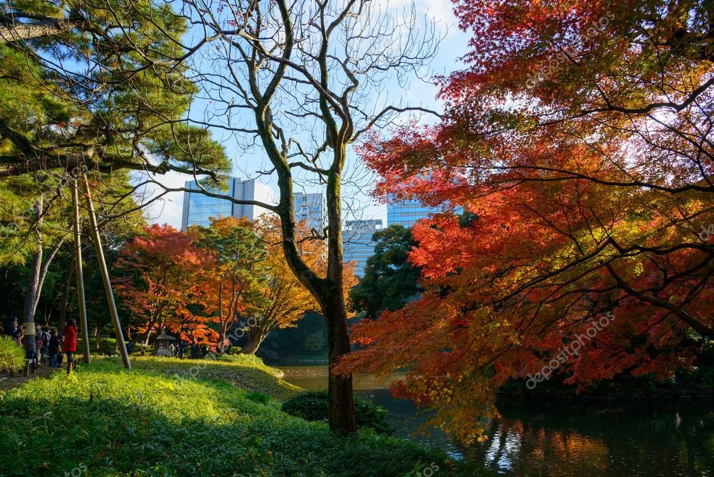 Resultado de imagem para outono em toquio