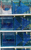 Lobster trap — Stock Photo