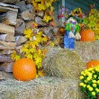 Fall Decorations — Stock Photo