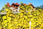 Winery Gray Monk — Stock Photo