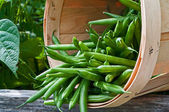 Beans in a Basket  — Stock Photo