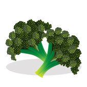 Cauliflower vector illustration. — Stock Vector