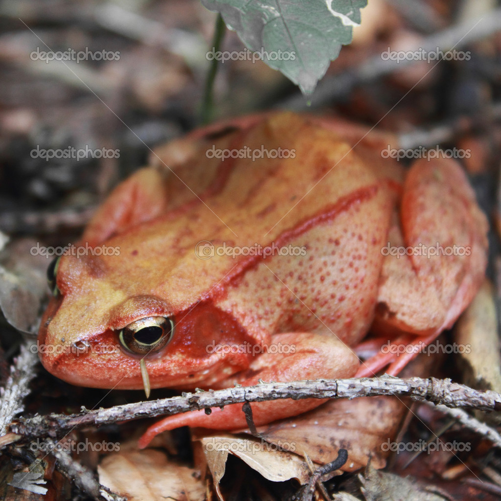 Frog as a symbol of riches, money and luck — Stock Photo #14061003