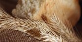 Brood en tarwe oren — Stockfoto