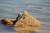 Volcanic rock in the water — Stock Photo
