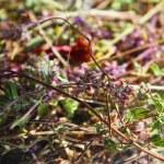 Medicinal dried herbs — Stock Photo #36287259
