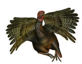 Turkey with outstretched wings — Stock Photo