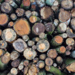 Stock Photo: Stacked logs