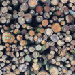 Stock Photo: Forestry stacked logs