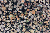 Forestry stacked logs — Stock Photo