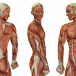 Muscle head and upper body — Stock Photo #29668727