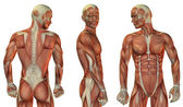 Muscle head and upper body — Stock Photo