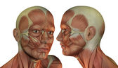 Muscle structure of head man — Stock Photo