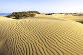 Desert Maspalomas Gran Canaria — Stock Photo