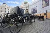 Vienna Carriage Tourist Ride — Stock Photo