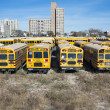School buses on parking lot — Stock Photo