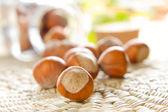 Hazelnuts (filbert) — 图库照片