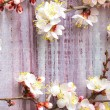 Spring blossoms over wooden background — Stockfoto