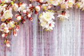 Spring blossoms over wooden background — Stock Photo