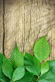 Green leaves over vintage wood — Stock Photo