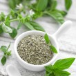 Fresh and dry basil — Stock Photo