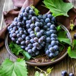 Cabernet grape — Stock Photo