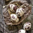 Quail eggs — Stock Photo #29325091