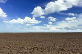 Plowed field — Stock Photo
