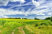 Campo di agricoltura — Foto Stock