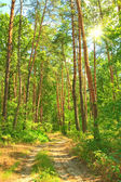Spring forest — Stock Photo