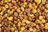 Kuru üzüm — Stok fotoğraf