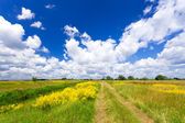 Summer landscape — Foto Stock