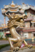 Draak in chinese tempel — Stockfoto