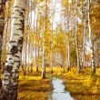 Forest birch near a  river - Stock Photo