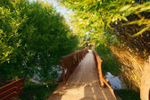 Bridge through the river — Stock Photo