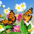 Two butterflies on camomiles — Stock Photo #21571905