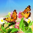Two butterflies on camomiles - Stock Photo