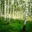 Forest birch — Stock Photo #25928455